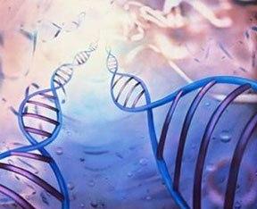 ДНК-человека